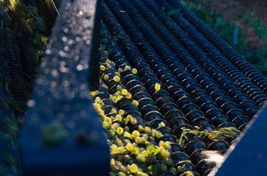 Ruta del Vino de Rueda vendimia