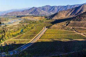 Ruta del Vino de Isla de Maipo