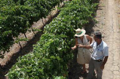 2ª Fiesta Ibérica del Vino de Almendralejo