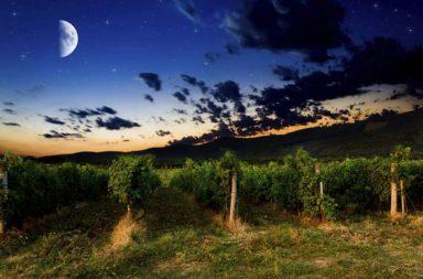 Vendimia nocturna Ribera del Guadiana