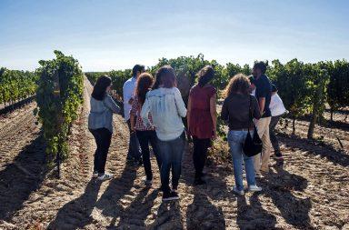 Ruta del Vino de Rueda_ vinos legendarios