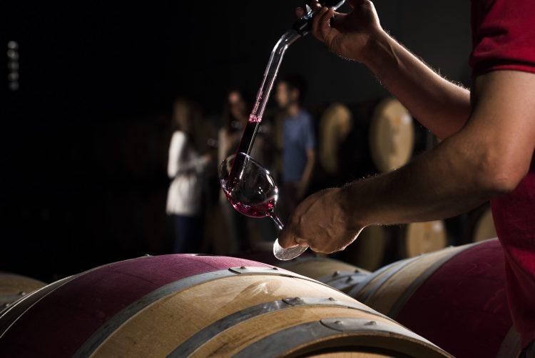 Wine Experiences Familia Torres