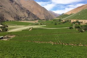 Ruta del Vino de Chile