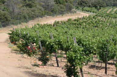 Madrid Rutas del Vino Bodega Nueva Valverde