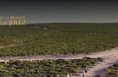ruta del vino y el brandy de jerez
