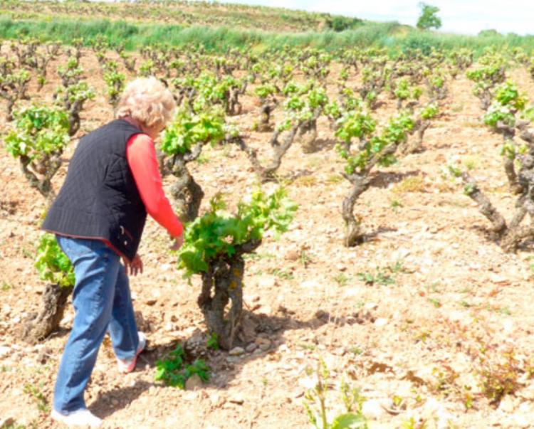 Bodegas Lecea viñedos