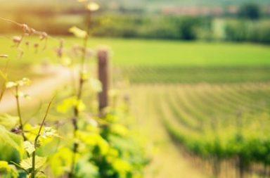 cambio climático y vino